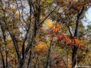 180-Woods-November-Deck-11032017_009