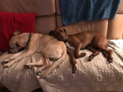Lexi and Remy on the beloved sofa
