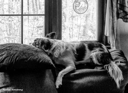 180-BW-November-Dog-Duke-11062017_007