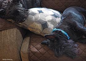300-bonnie-gibbs-crhistmas-dogs-12252017_004