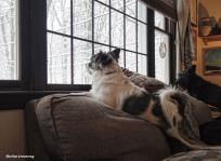 300-Duke-Gibbs-Snow-Picture-Window-12092017_09