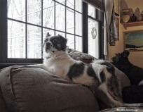 300-Duke-Gibbs-Snow-Picture-Window-12092017_13