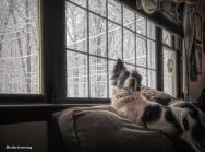 300-Duke-Snow-Picture-Window-12092017_16