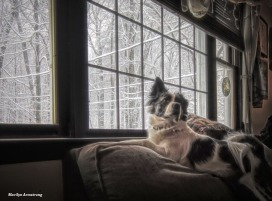 300-Duke-Snow-Picture-Window-12092017_16