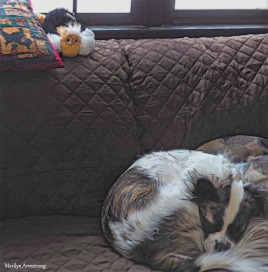 300-duke-toy-crhistmas-dogs-12252017_001