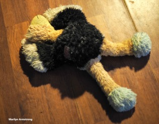 300-survivor-dog-toys-old-new-12222017_003
