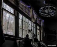 300-WA-Dogs-Christmas-12182017_002-A