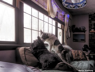 300-WA-Dogs-Christmas-12182017_005