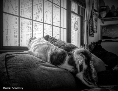 Bonnie and Duke watching the falling snow