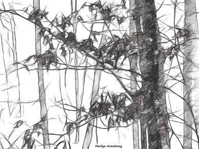180-BW-sketch-Snow-Long-Lens- 01032018_005