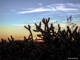180-Cactus-Sunset-Arizona-Gar-01132016_forgotten_095
