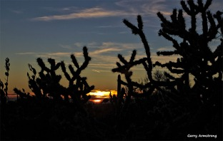 A cactus sunset near the Superstitions