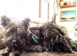 180-dogs-bonnie-gibbs-01082018_010
