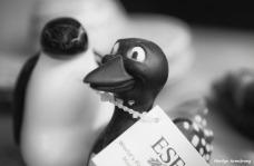 180-loon-penguin-bw-rubber-ducks_01122018_010