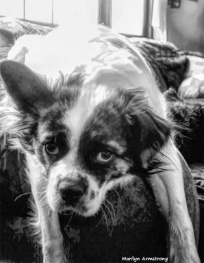 300-BW-Duke-Dog-01262018_003