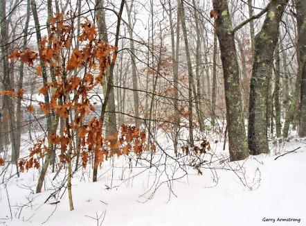 300-home-first-snow-day-gar-01042018_056
