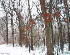 300-woods-first-snow-day-gar-01042018_068