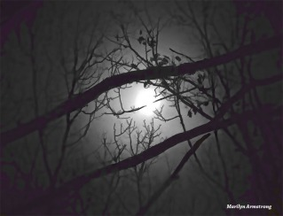 180-BW-Branches-Super-Moon-12042017_03