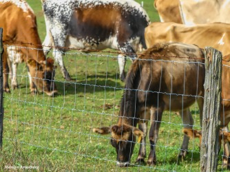 180-Cows-Pasture-Farm-Mar-100517_139