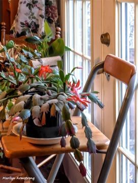 180-Doors-Christmas-Cactus-4-02062018_050