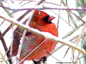 A cardinal in winter