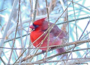 180-Graphic-Cardinal-II-031015_21