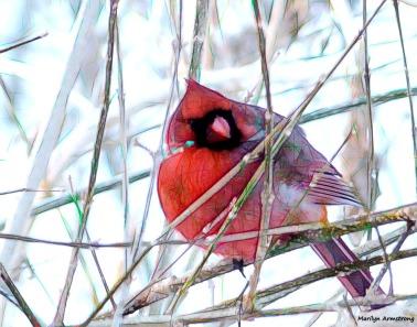 180-Graphic-Cardinal-II-031015_23