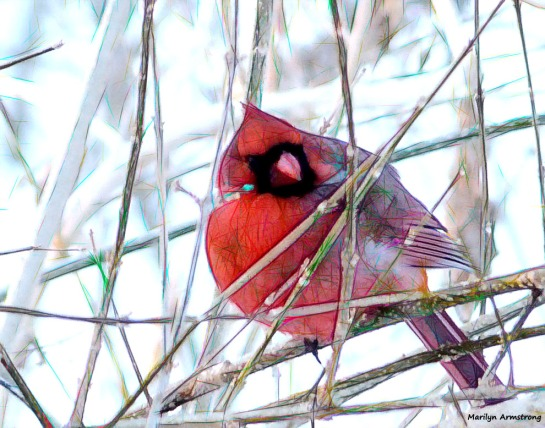 180-Graphic-Cardinal-II-031015_23