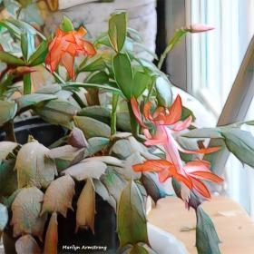 180-Graphic-Christmas-Cactus-4-02062018_052