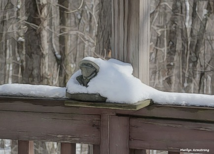 Snowy frog on the deck