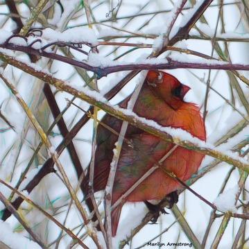 180-Graphic-SQUARE-Cardinal-II-031015_03