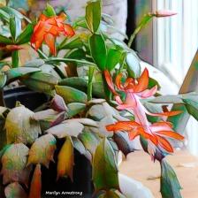 180-Graphic-Square-Christmas-Cactus-4-02062018_052