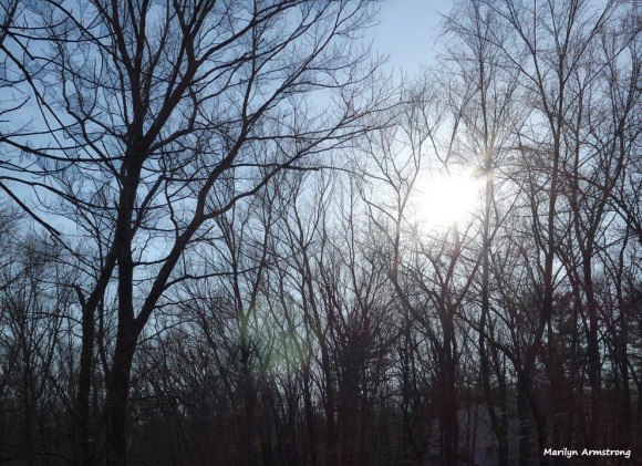 180-Graphic-Sunshine-On-A-Warm-Day-in-February-02212018_101
