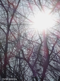 180-Graphic-Sunshine-On-A-Warm-Day-in-February-02212018_103
