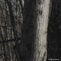 180-Graphic-Trees-Bark-Warm-Day-in-February-02212018_106
