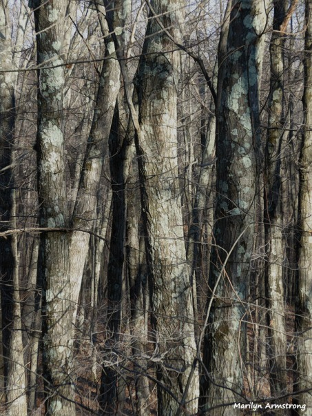 180-Graphic-Trees-Bark-Warm-Day-in-February-02212018_117