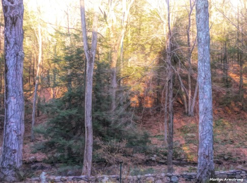 180-Paint-Woods-Curley-12072017_003