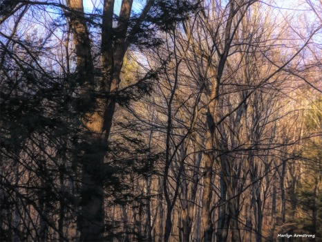 180-Paint-Woods-Curley-12072017_009