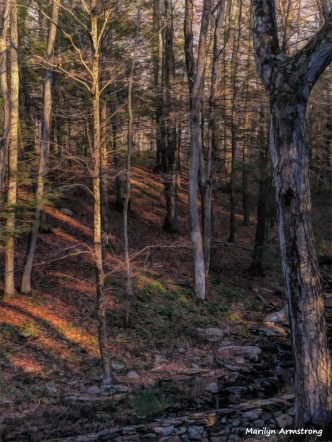 180-Twilight-Paint-Woods-Curley-12072017_006