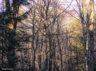 180-Woods-Paint-Curley-Dec-17_008