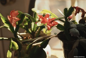 300-graphic-christmas-cactus-new-02132018_007