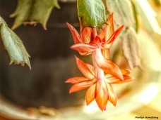 300-graphic-christmas-cactus-new-02132018_014