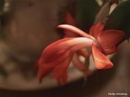 300-graphic-christmas-cactus-new-02132018_020b