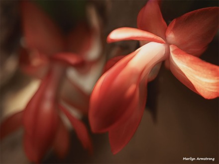 300-graphic-christmas-cactus-new-02132018_021