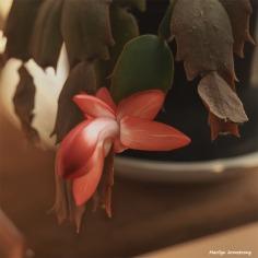 300-graphic-square-christmas-cactus-new-02132018_005