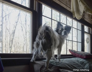 180-Graphic-Duke-Standing-Dogs-Home-2018-03-26_013