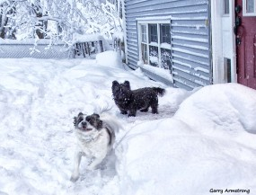 180-happy-duke-heavy-snow-3-gar-03132018_032