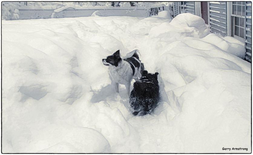 Snowy helpmates