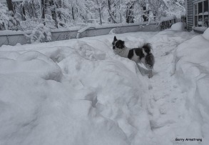 300-graphic-duke-heavy-snow-3-gar-03132018_020