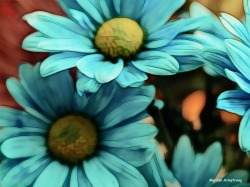 300-graphic-macro-blue-daisy-03172018_008